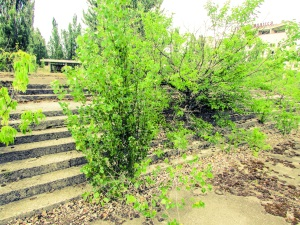 Trærne vokser opp gjennom betongen på Leninplassen foran kulturpalasset.