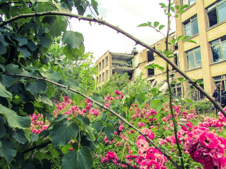 Blomstene lever tilsynelatende godt blant Priypats ruiner.