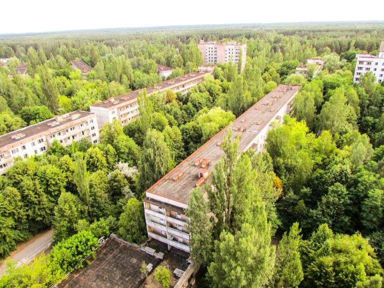 Trærne har vokst seg høyere enn seksetasjers hus i Pripyat.